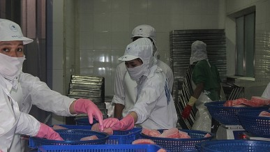 Businesses complain of difficulties, Veterinary agencies carry out online quarantine